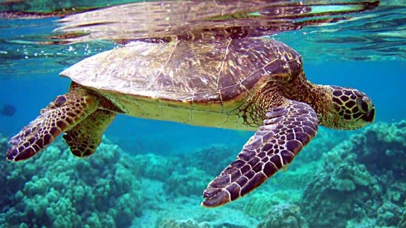Tortugas de las Islas de Cabo Verde